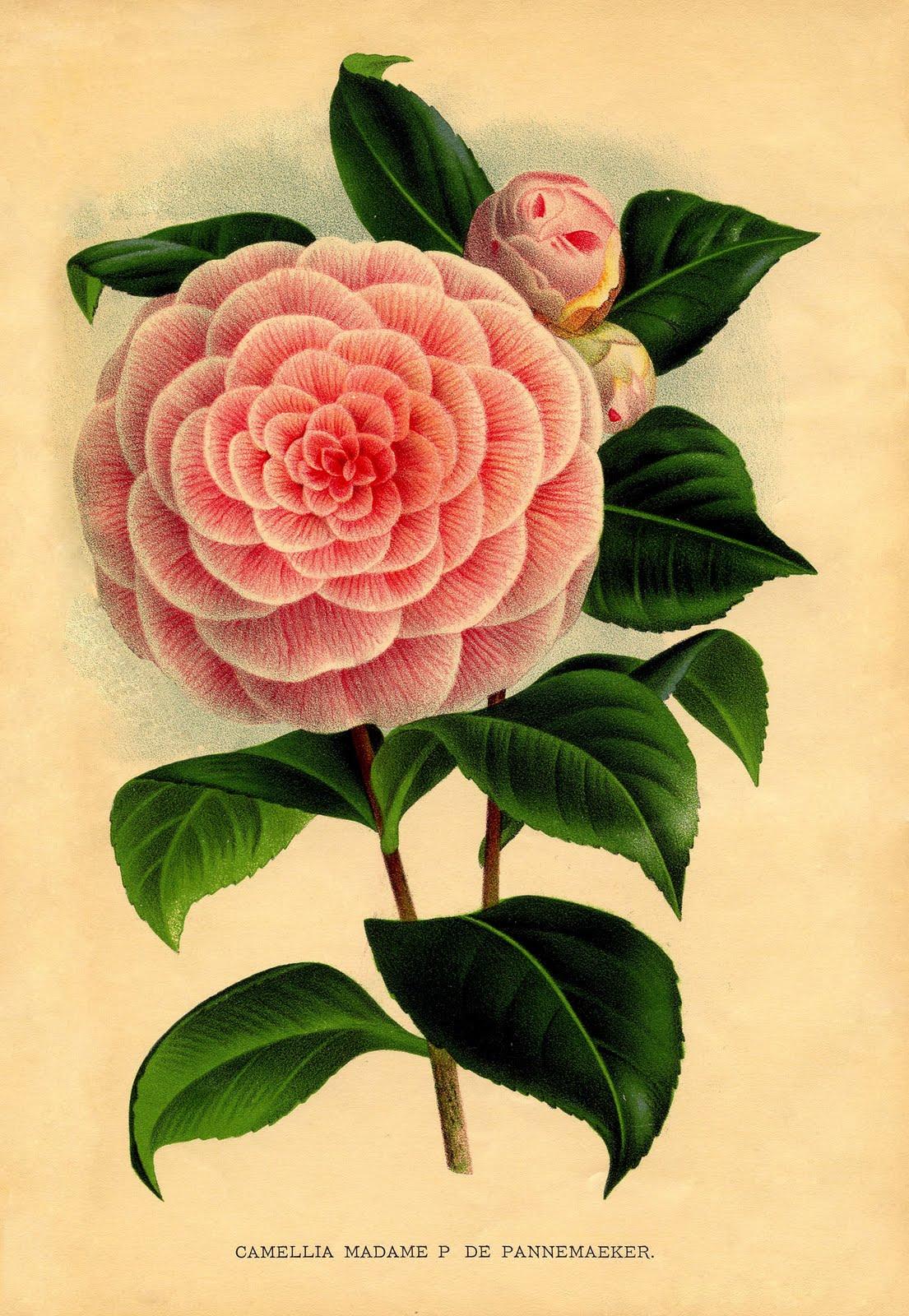 Programa 2014 2015 for Libros de botanica pdf